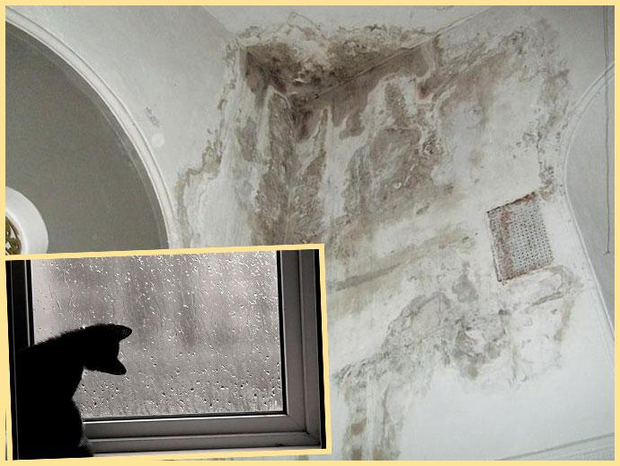 Плесень на стенах и дождь и сырость за окном