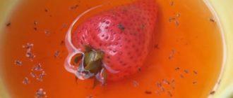 Плодовая мушка