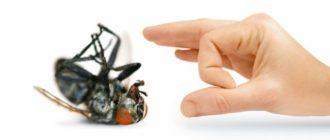Хотите узнать как уничтожить мух в квартире и доме