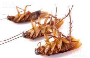 как избавиться от тараканов быстро за 1 день