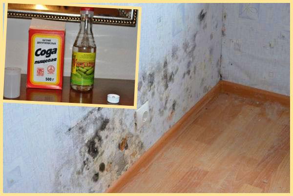 Плесень на стенах и удаление уксусом и содой