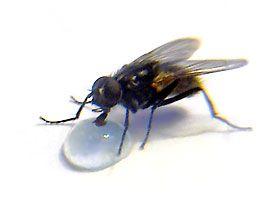 мухи любят влагу, избавляться от мух
