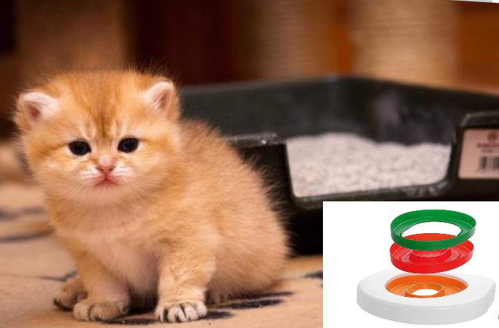 Если вы приучате котят, которые родились у вас в доме