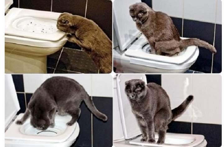 Для перевода кота из лотка в унитаз