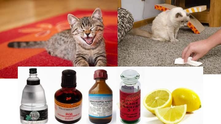 Лимон от кошачьей мочи