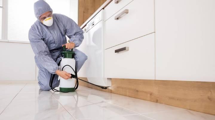 уборка является наилучшим способом борьбы с вредителем