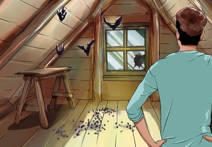 Летучие мыши – как отвадить рукокрылых из своего жилища: Обзор Видео