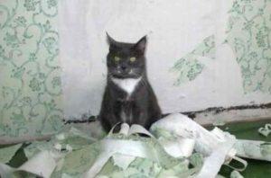 Кот в обоях