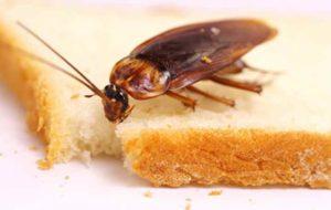 Как избавиться от тараканов в квартире народными средствами? Обзор Видео