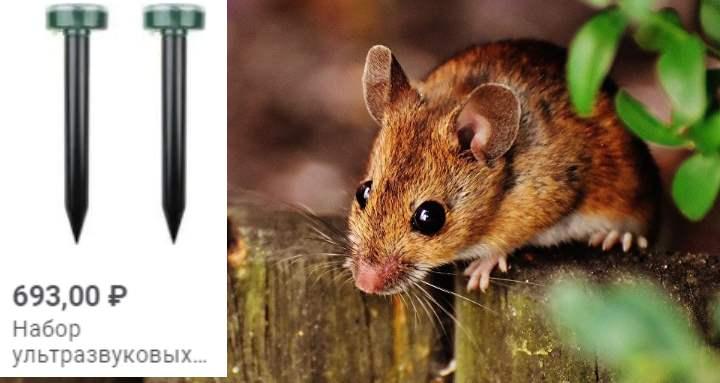 Что отпугивает мышей в доме народные средства