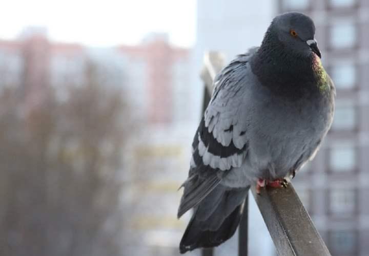 методы, предполагающие внушить птицам страх просто своим видом