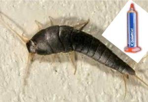 Мокрицы - членистоногие неприятные на вид насекомые
