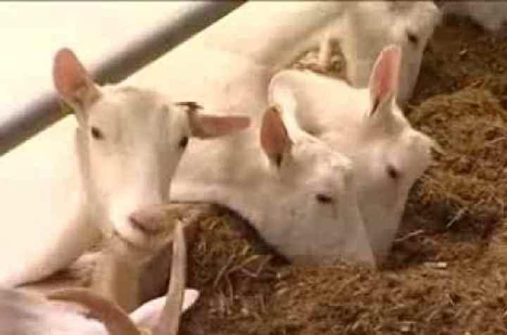 Стерилизованное и пастеризованное молоко могут быть разной жирности от 1% до 4%