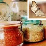 Моль – небольшие летающие насекомые, ведущие ночной образ жизни
