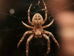 Как вести себя при виде паука?