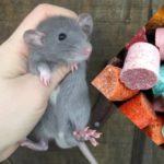 Все химические средства, которые используются для борьбы с мышами и крысами