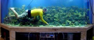 - очищение стен от водорослей и известкового налета;