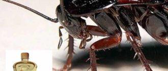Компании, специализирующиеся на выпуске средств, защищающих квартиры от насекомых