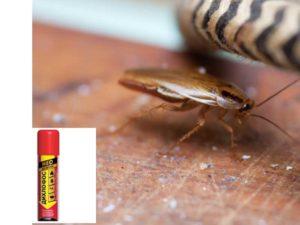 Скорость действия. Тараканы погибают быстро, всего через несколько часов после обработки дома.