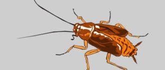 Специальные карандаши от тараканов и порошковые средства