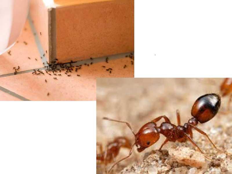 Не стоит опрыскивать насекомых