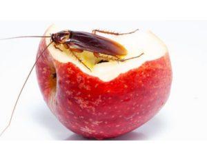 количество тараканов не станет меньше