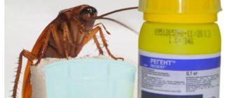 При попадании средства в желудок таракана, он умрет в течение часа.