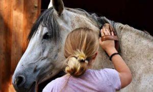 Как чистить лошадь правильно