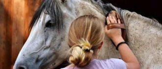 Чистка лица лошади