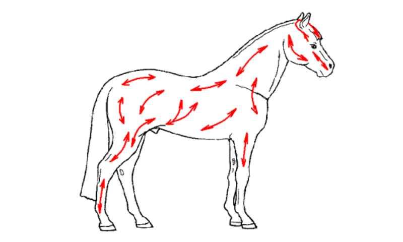 Мягкие щетки для ухода за лошадью