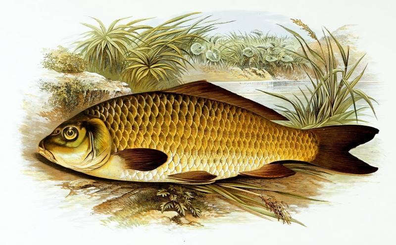 надо ли чистить рыбу