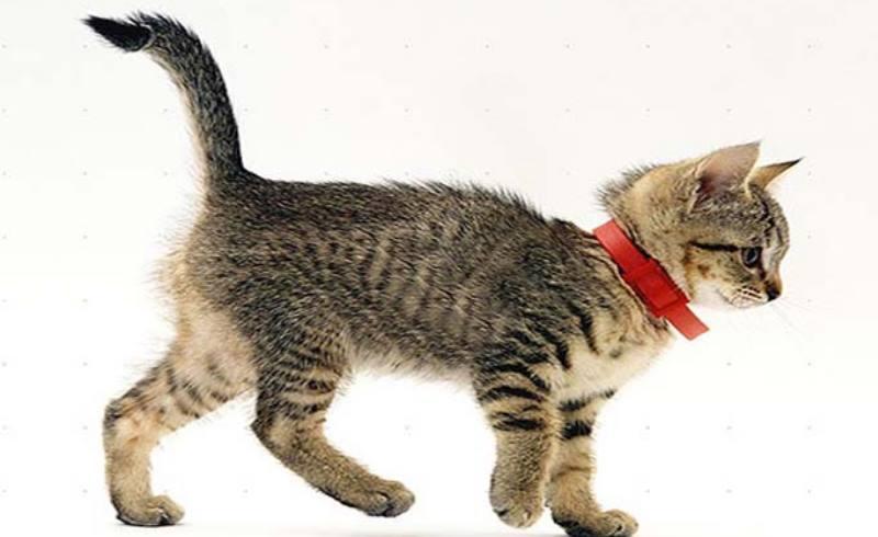 Ошейник запрещён к применению на новорождённых котятах
